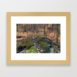November leaves Framed Art Print
