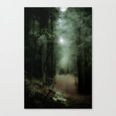 In the forest of Washington state, ponderosa pine trees   Canvas Print