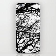 black tree iPhone & iPod Skin