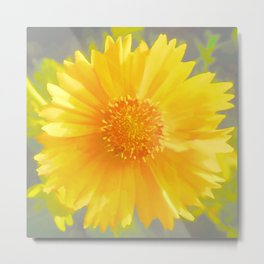 Yellow Wildflower - Coreopsis Metal Print