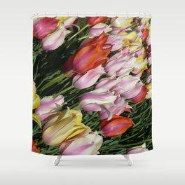 Field of Rainbow Tulips in Albany, NY Shower Curtain