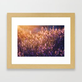 golden heather Framed Art Print