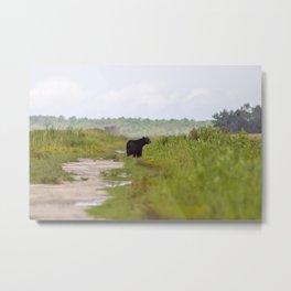 Adult Black Bear Metal Print