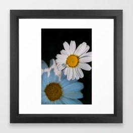 Close up daisy Framed Art Print