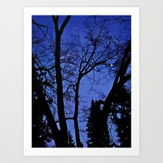 Cemetery trees Art Print