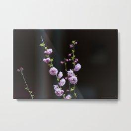 Blooming Rose Bush in Spring Metal Print