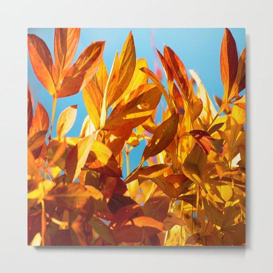 Autumn colors leaves against the blue sky Metal Print