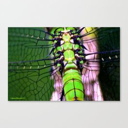 Emerald Flight Canvas Print