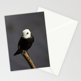 Birds from Pantanal Freirinha Stationery Cards