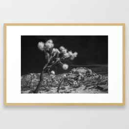 Joshua Trees and Boulders in Infrared Black and White at Joshua Tree National Park California Framed Art Print
