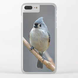 Tufted Titmouse 9639 Clear iPhone Case