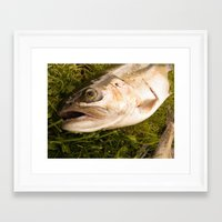 trout Framed Art Prints featuring Trout by Shaun Drew