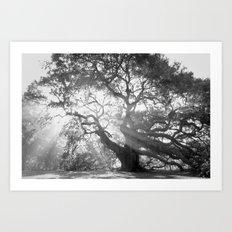 Angel Oak 2 Art Print