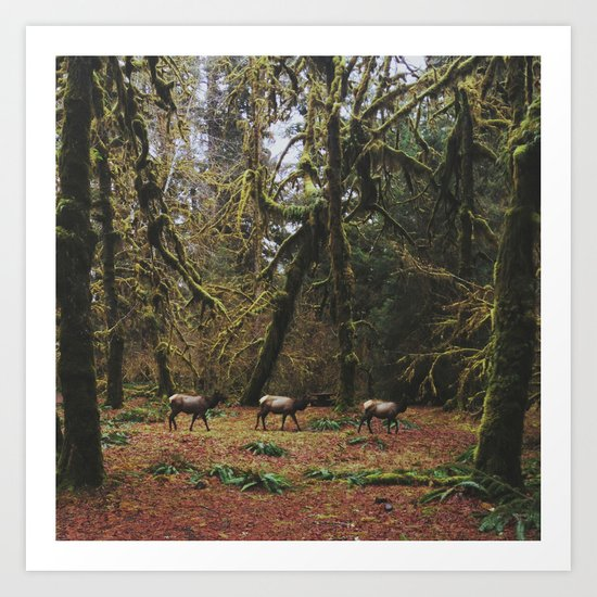 Rainforest Elk Art Print