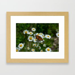 butterfly in the daisies Framed Art Print