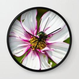 Dogbane Beetle Eating Flower Wall Clock