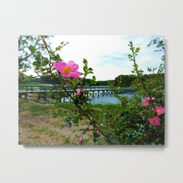Cape Rose in Full Bloom Metal Print