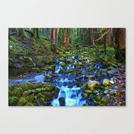 Rainforest Runoff Canvas Print