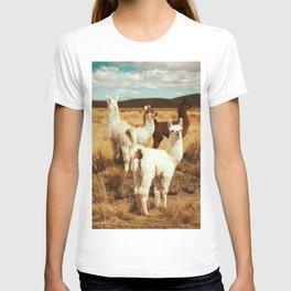 kitty lama T-shirt