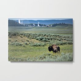 A Bull Bison Heads Towards Thermal Activity in the Hayden Valley of Yellowstone National Park Metal Print