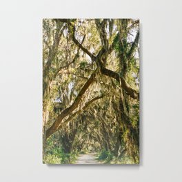Savannah National Wildlife Refuge VII Metal Print