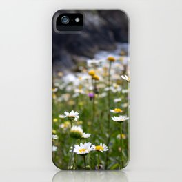 Flowers of daisies in the countryside at sunset iPhone Case