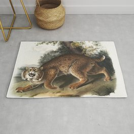 American wild cat (Lynx rufus) from the viviparous quadrupeds of North America (1845) illustrated by Rug