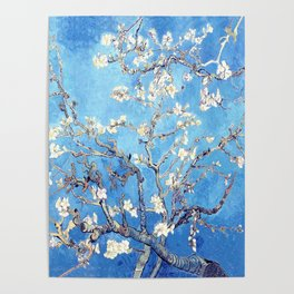 Vincent Van Gogh Almond Blossoms. Sky Blue Poster