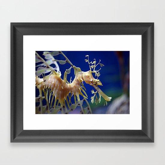 Leafy Sea Dragon Framed Art Print