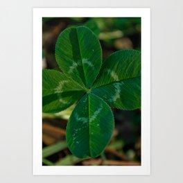 lucky 4 leaf clover Art Print