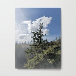 Gnarled Tree Against Blue Sky and Clouds, Beautiful Landscape of Old Tree Metal Print