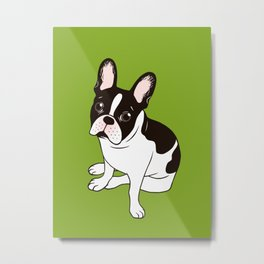 Cute double hooded pied French Bulldog wants your attention Metal Print