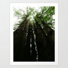Redwoods #2 Art Print