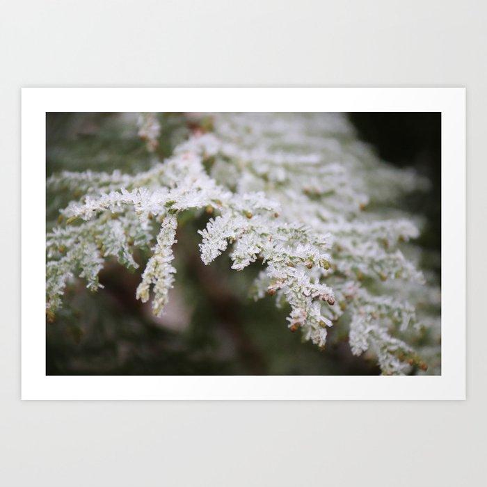 Frozen thuja Art Print
