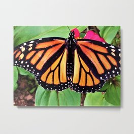 The Monarch Shows A Glimpse Of Trust Metal Print