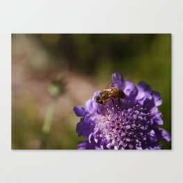 FlowerBee Canvas Print