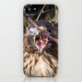 A Red-Tailed Hawk Eating a Rodent With Blinking Blue and Brown Eyes iPhone Case