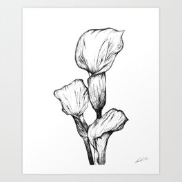 Black&White Calla Lily Art Print