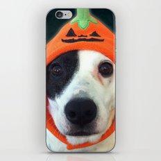 Pumpkin Dog iPhone & iPod Skin