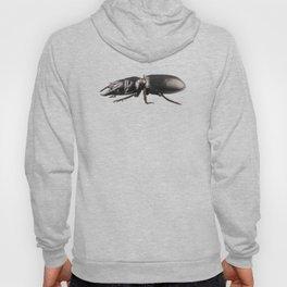 beetle species Lucanus cervus Hoody