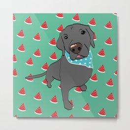 Benji, The Labrador Retriever Metal Print
