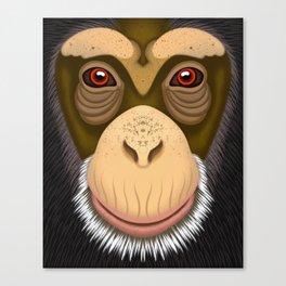 Old Chimpanzee Canvas Print