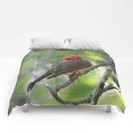 Vermilion Flycatcher Comforters