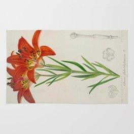 Lilium philadelphicum Vintage Botanical Floral Flower Plant Scientific Rug