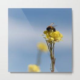 Honey bee on a wildflower Metal Print