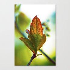 Glowing leaf Canvas Print