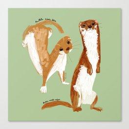 Funny Weasel ( Mustela nivalis ) Canvas Print