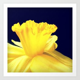 Daffodil Ruffles - iPhoneography Art Print