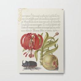 Scarlet Turks Cap Rhinoceros Beetle and Pomegranate from Mira Calligraphiae Monumenta or The Model B Metal Print