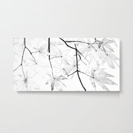 black and white maple leaves Metal Print